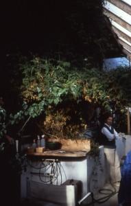 Abby Rockefeller's Greywater Greenhouse