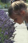 Child & Lavender Flowers